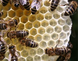 Bienenwachs_2_kl